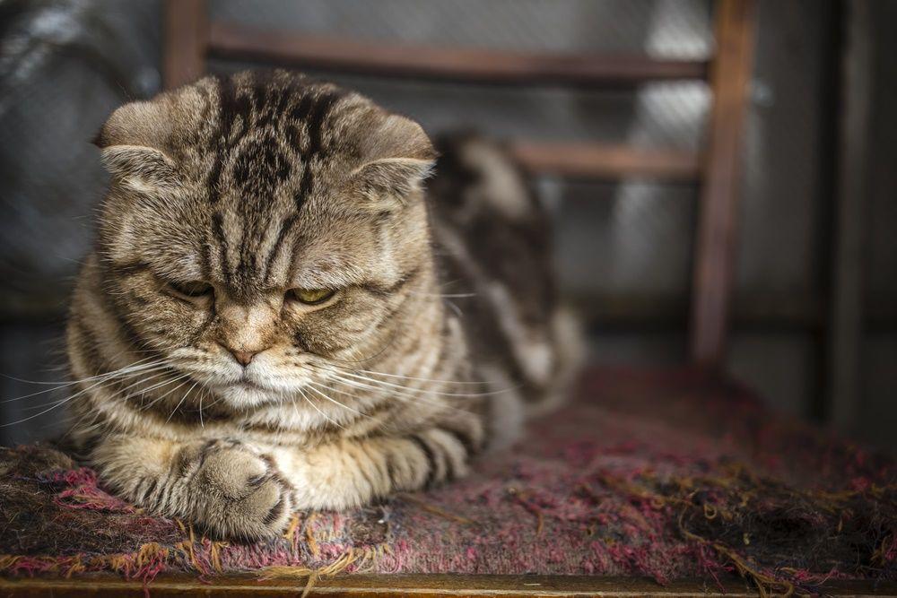 Img gatos rascadores caseros alfombras
