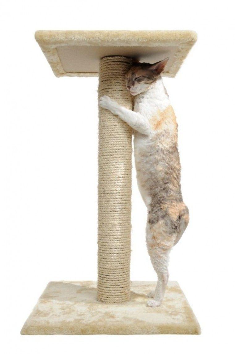 Img gatos rascadores muebles art