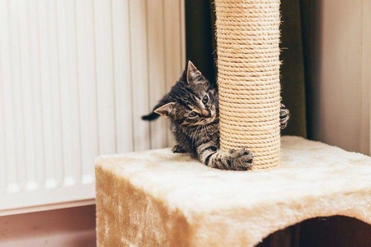 Img gatos rascar sofa trucos 2 art