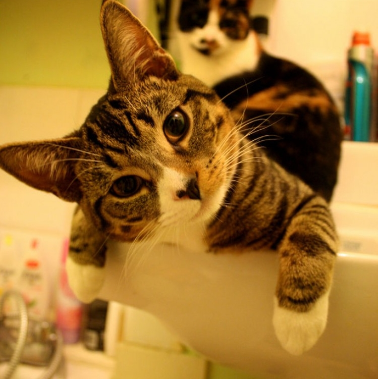 Img gatos recetas refrescantes verano