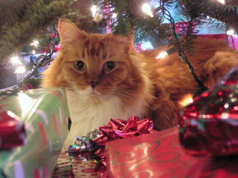 Img gatos regalos navidad hd