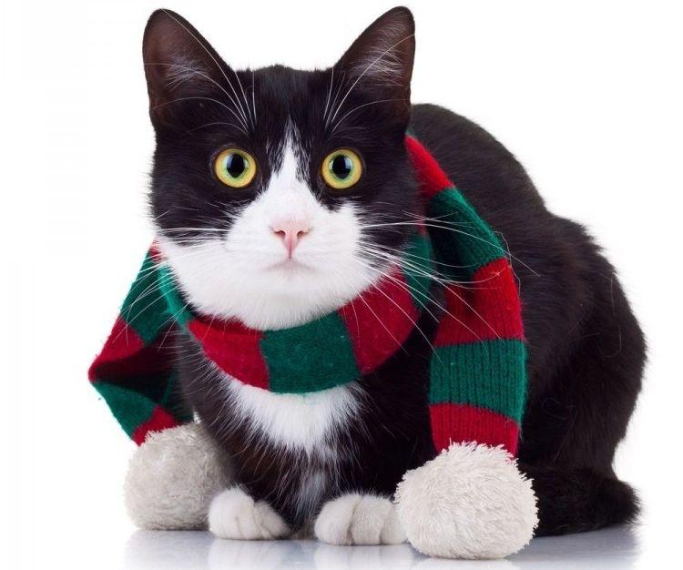 Img gatos regalos navidad ideas art