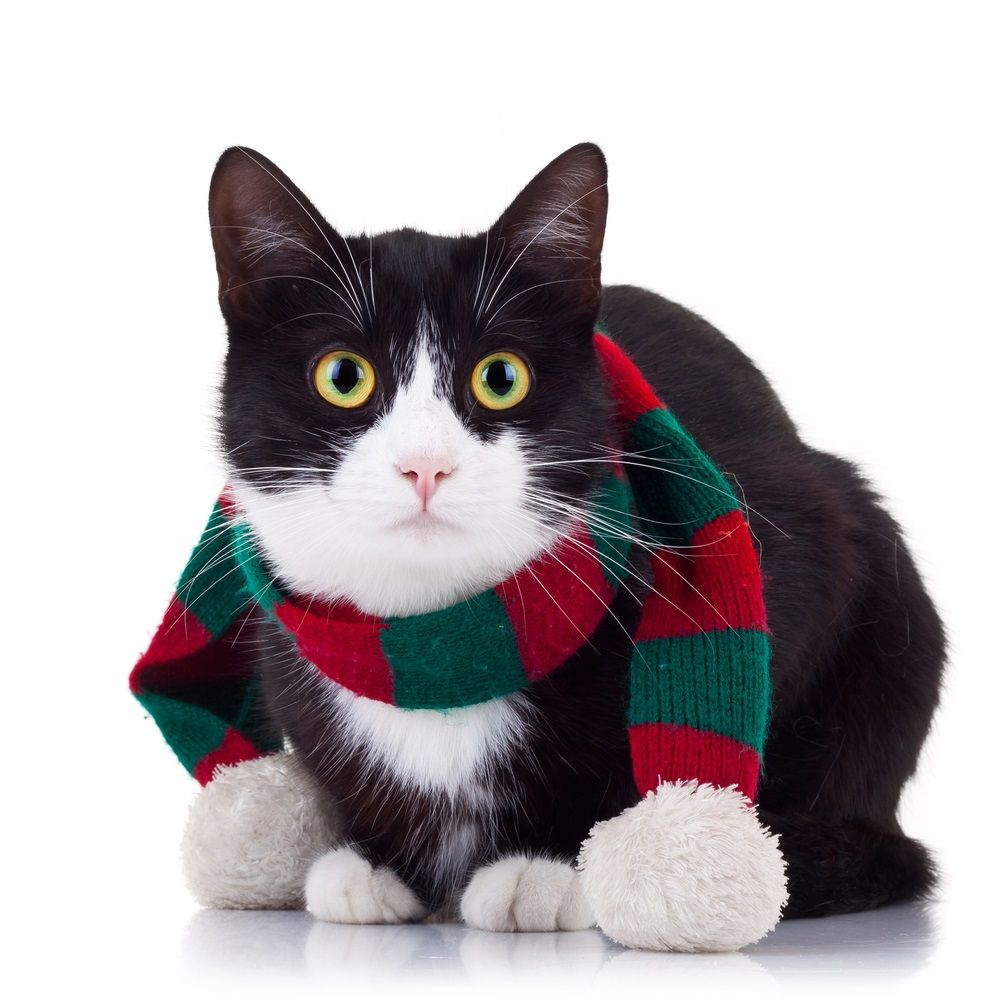 Img gatos regalos navidad ideas