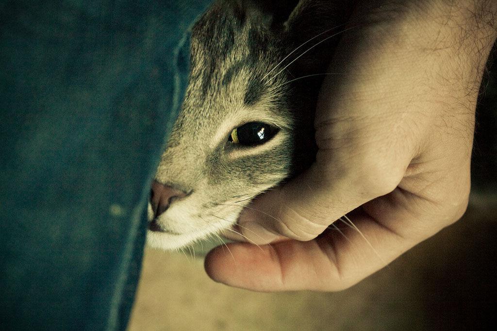 Img gatos ronroneann