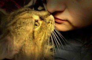 Img gatos ronroneos maullidos felinos comunicarse hablar animales mascotas engatusar art