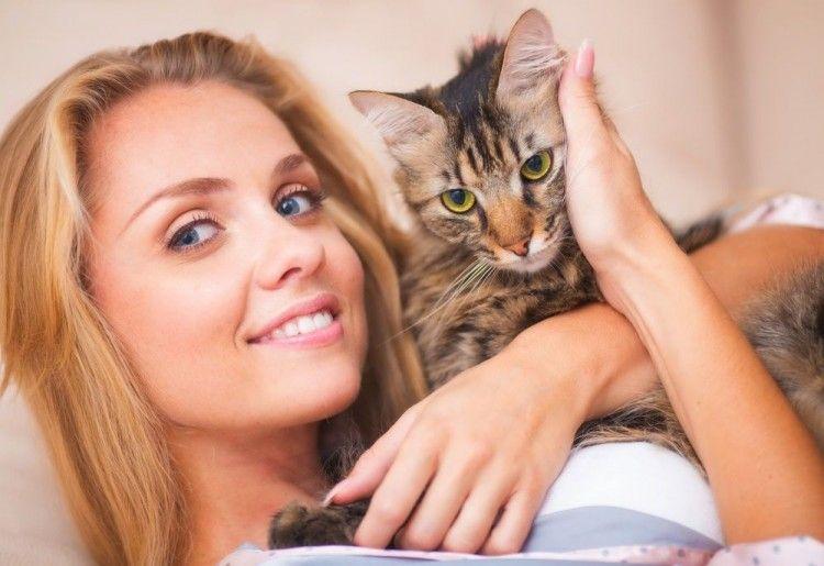 Img gatos salud corazon art