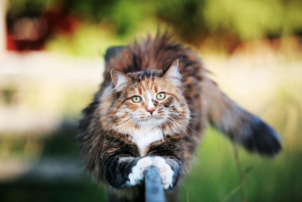 img_gatos salud unas