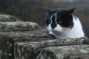 Img gatos secretos videos documentales la vida secreta del gato bbc felinos mascotas comportamiento listado