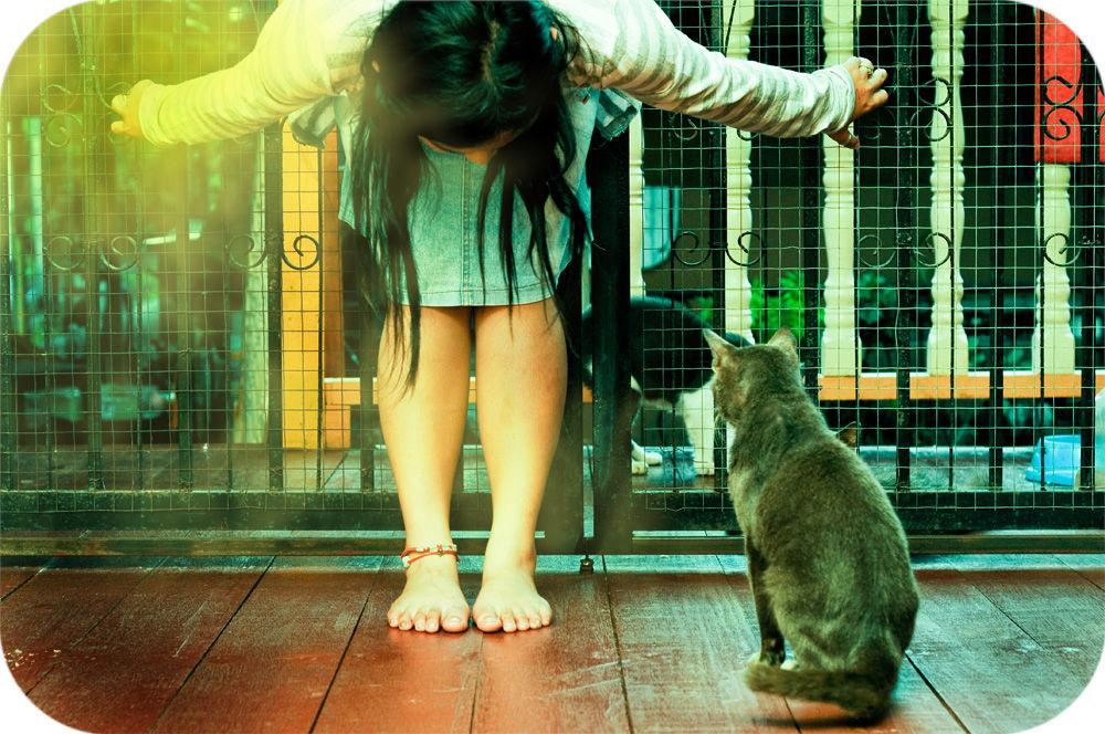 Img gatos sobrepeso alimentacion ejercicios jugar plan adelgazamiento felinos animales mascotas