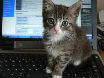 Img gatos tecnologias ordenadores art
