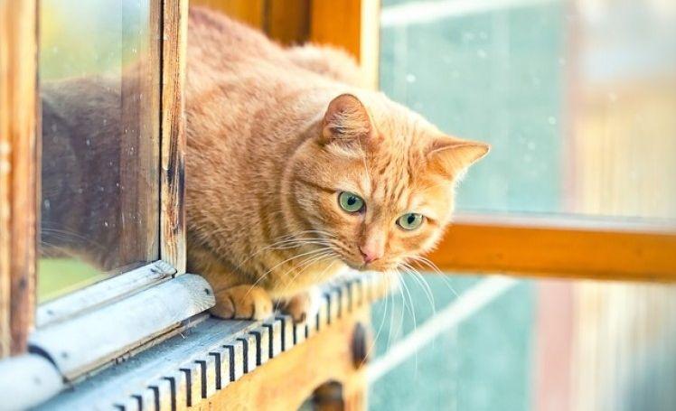 Img gatos ventanas peligros verano 2 art