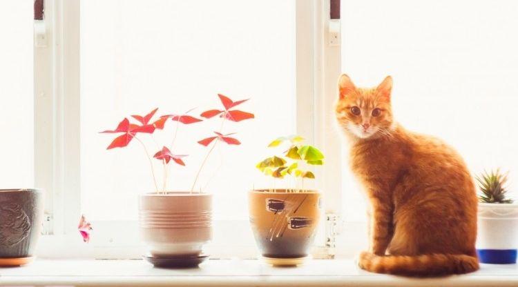 Img gatos ventanas peligros verano art