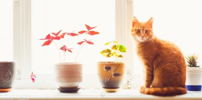 Img gatos ventanas peligros verano portada