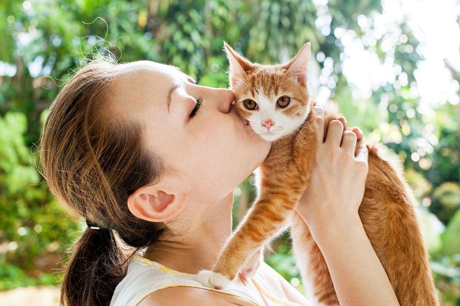 img_gatos veterinarios verano