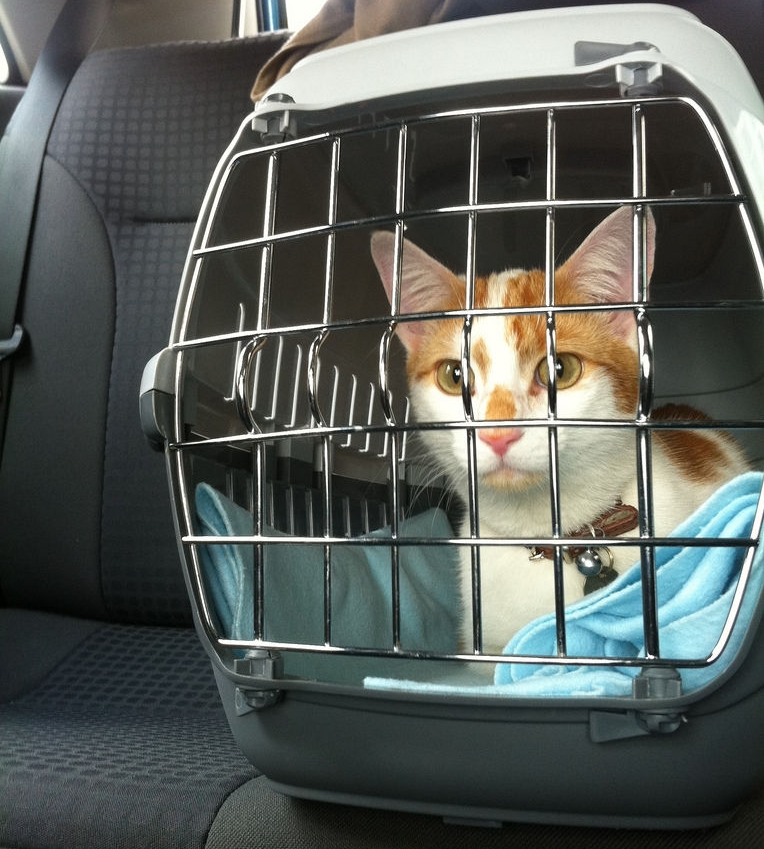Img gatos viajar coches transportin art