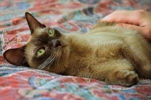 Img gatos vomitos enfermedades felinos salud mascotas animales art