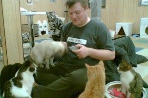 Img gatoteca cafes para gatos cat cafe madrid amigos de gatos locales art