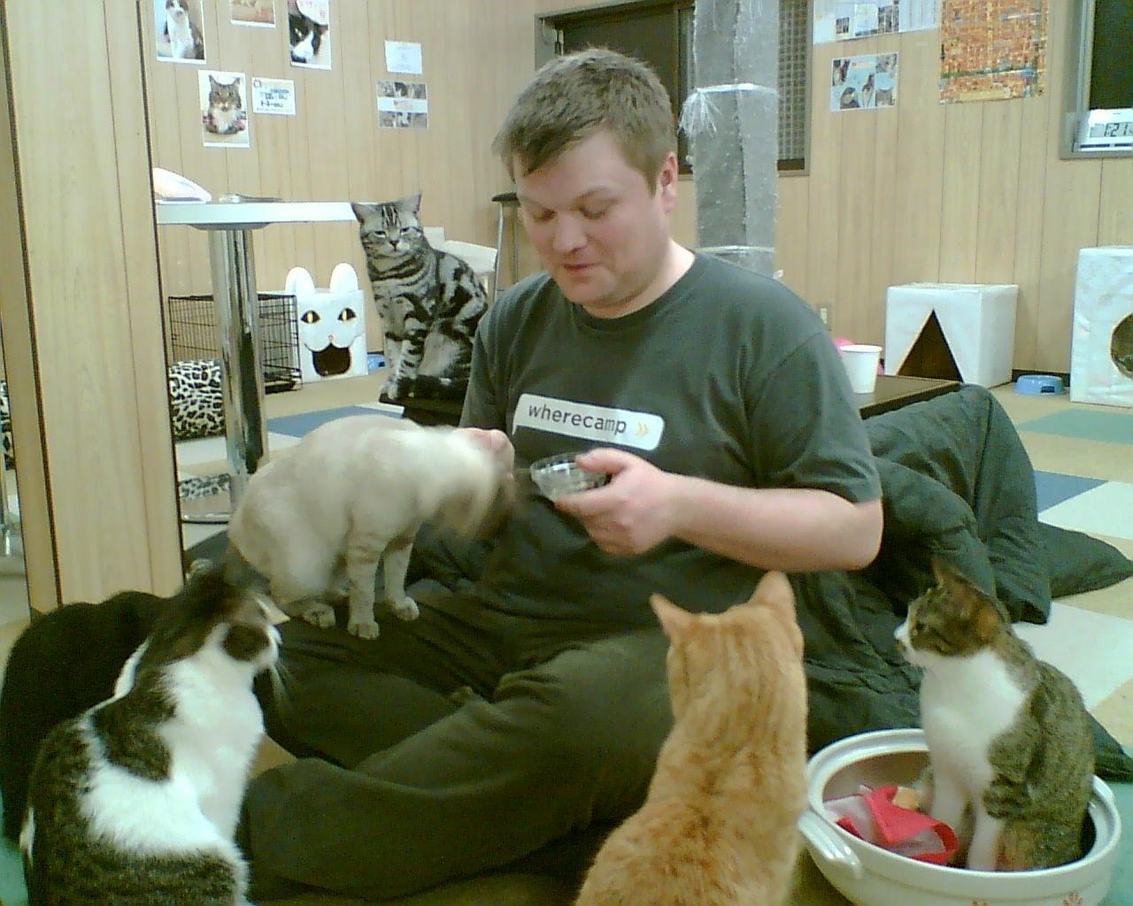 Img gatoteca cafes para gatos cat cafe madrid amigos de gatos locales