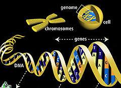 Img genoma1
