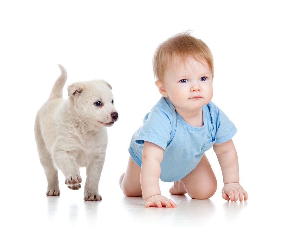 Img hablar perros bebes gatos cachorros
