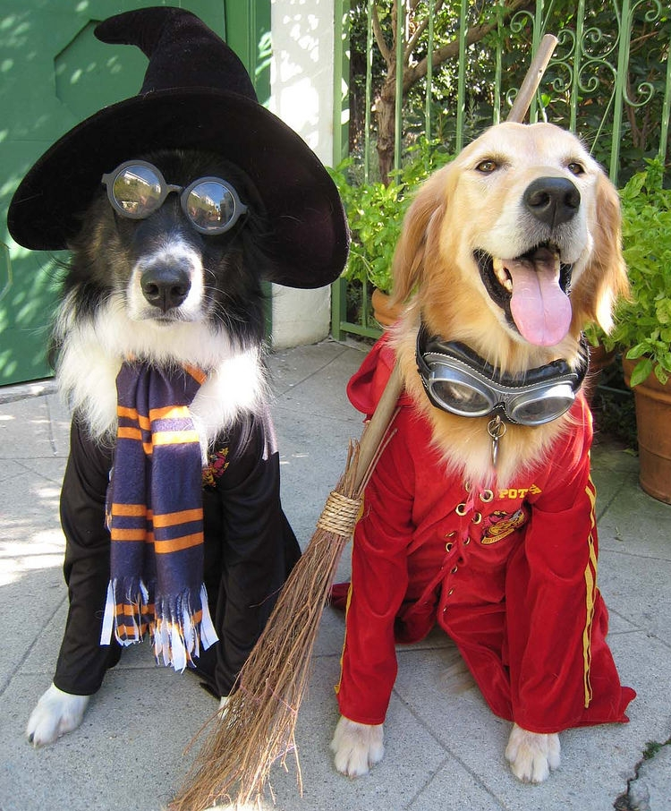 Img halloween perros disfraces disfrazar animales art