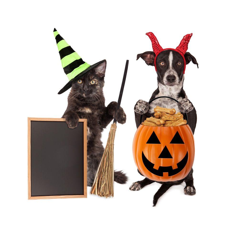 Img halloween perros gatos
