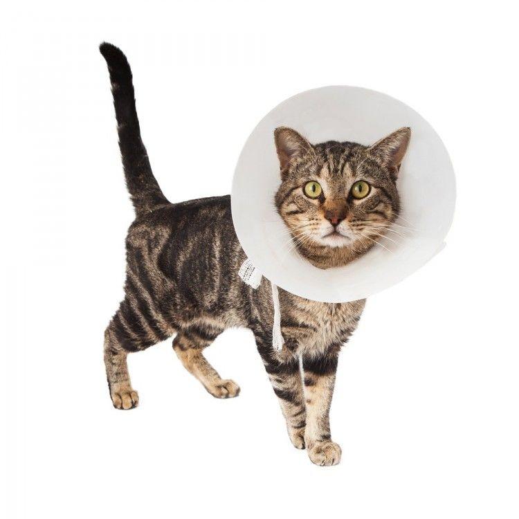 Img heridas gatos art