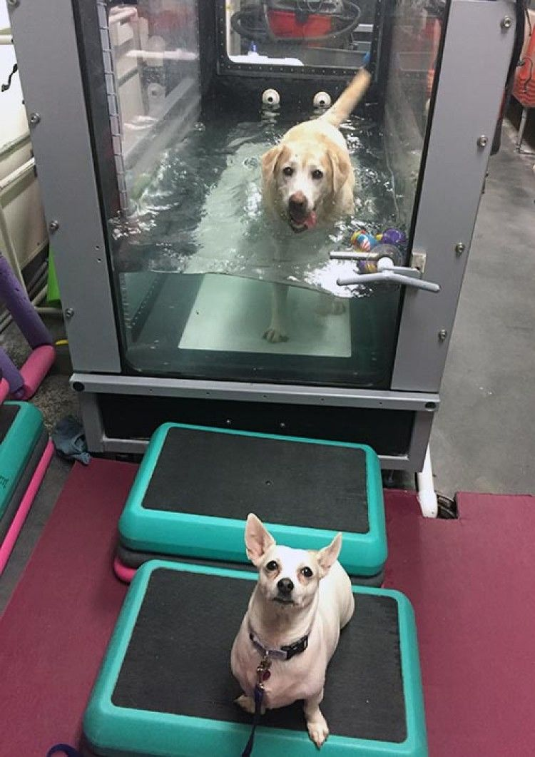 Img hidroterapia perros gatos art