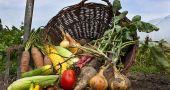 Img higiene seguridad cultivos hd