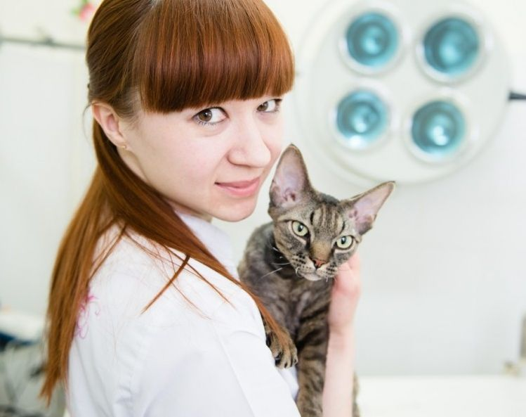 Img hipertiroidismo gatos art