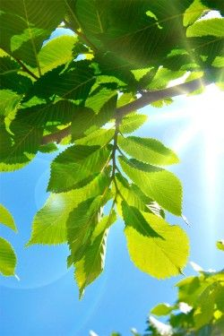 Img hojas