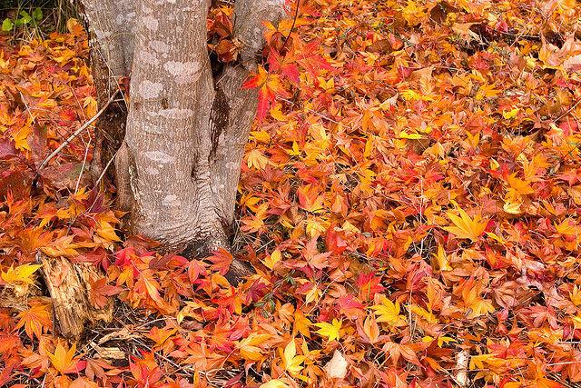 Img hojas suelo oto o
