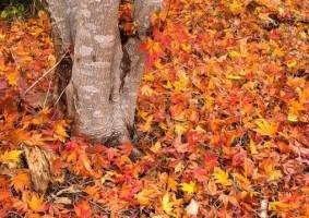 Img hojas suelo oto o articulo