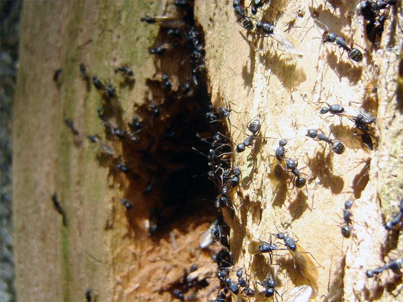 Img hormigas