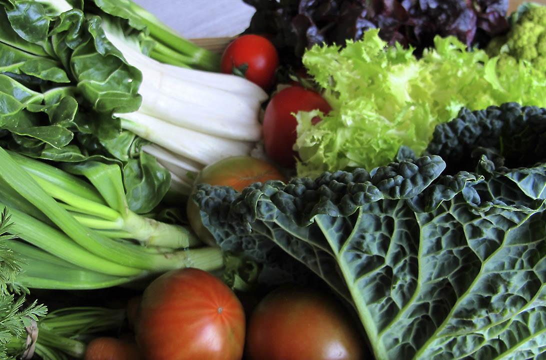 Img hortalizas casabona