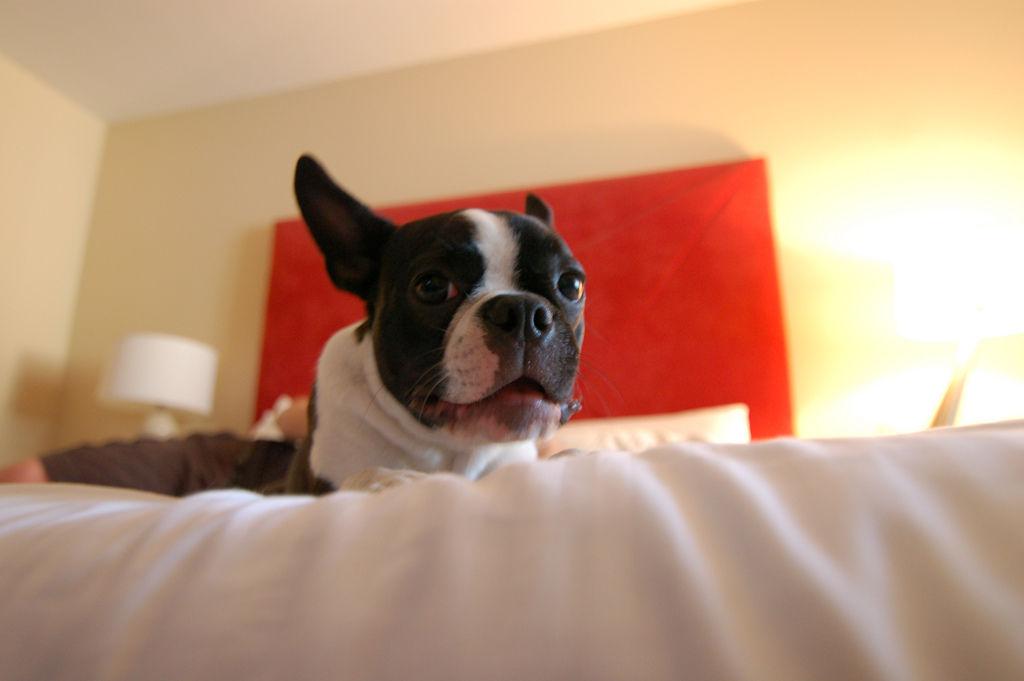 Img hotel perros viajar