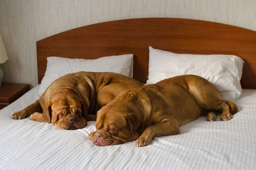 img_hoteles animales viajar pet