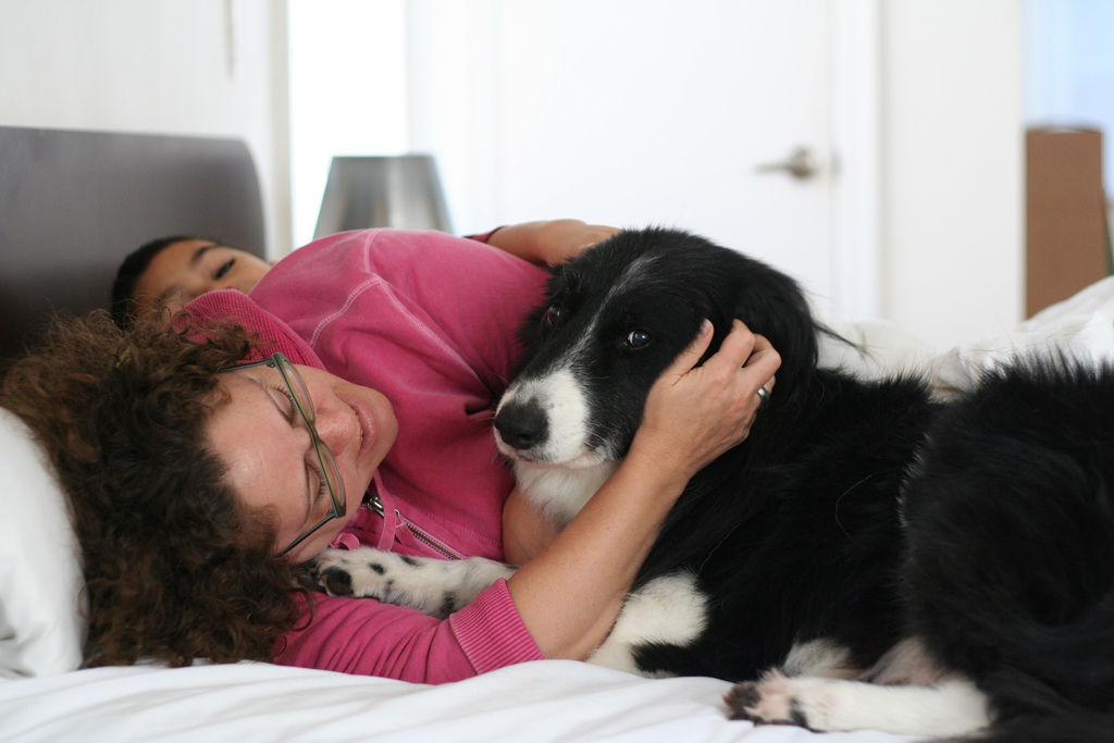 Img hoteles para perros guias encontrar habitaciones admiten mascotas
