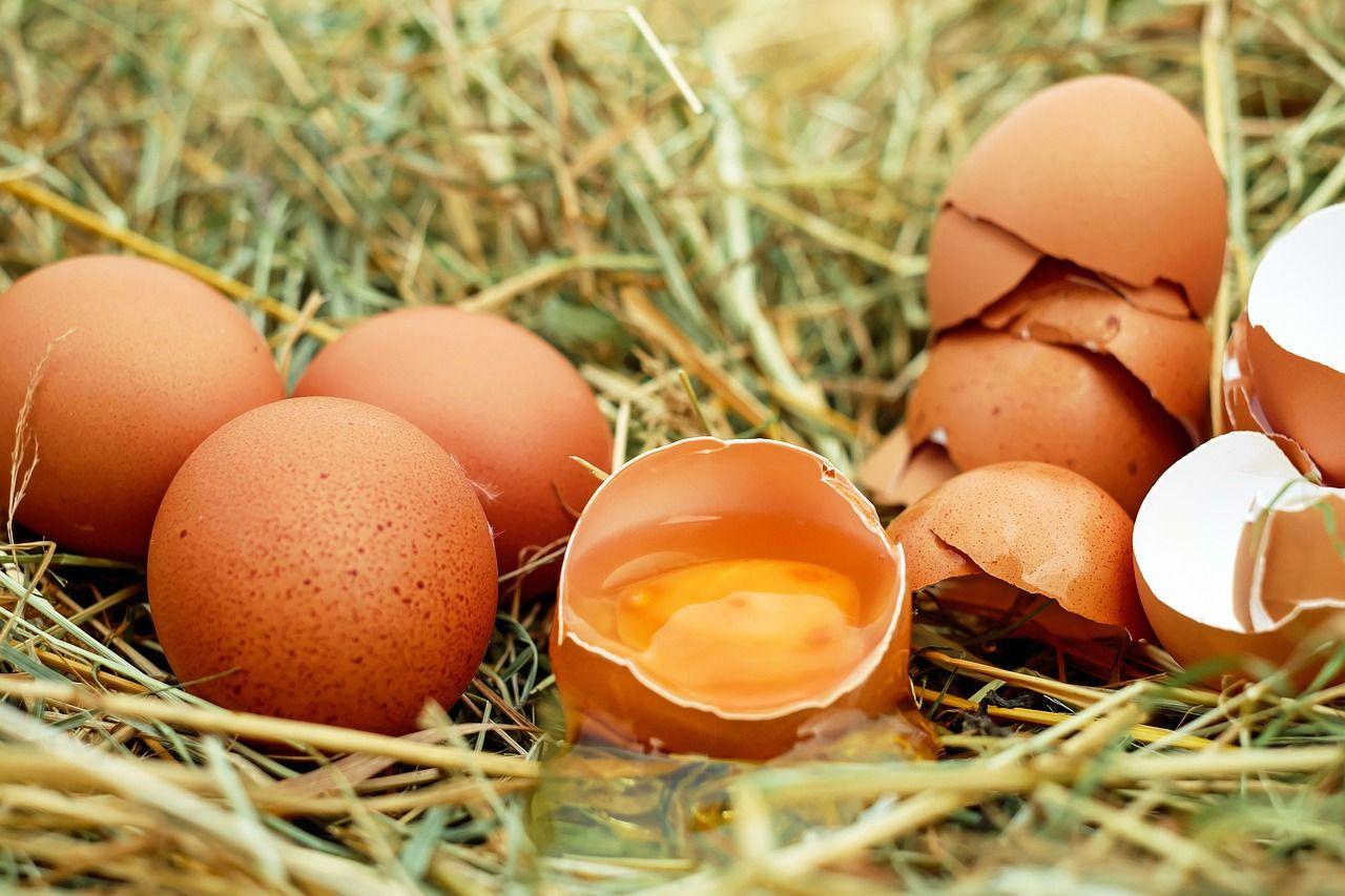 Img huevos gallinas felices hd