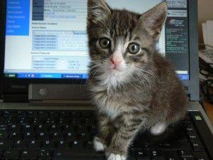 Img imgs201211maltrato animal internet pasos para denunciar videos violentos art