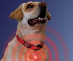 Img imgs201303wwwimgs201303perros salud collares cuidar cuidados veterinarios tecnologias pulsaciones obesidad telefonos mascotas animales vigilar art