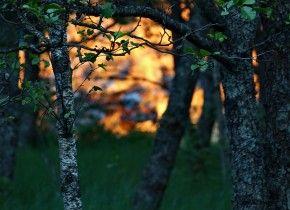 Img incendioforestal hojas