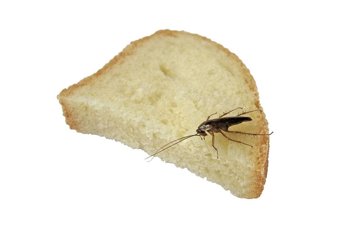 Img insectos cocina hd