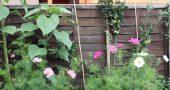 img_jardin 2