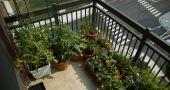 Img jardin balcon