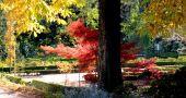 Img jardin botanico espana hd