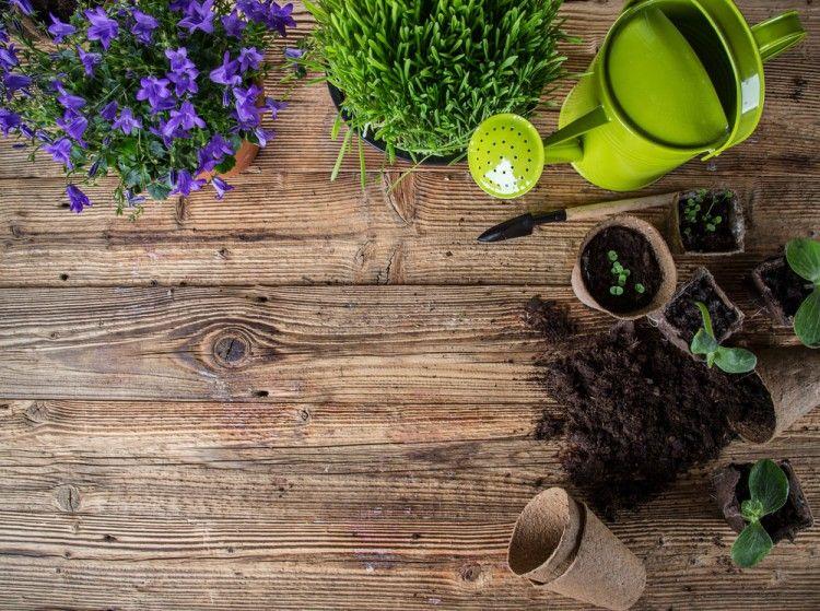 Img jardin sostenible trucos huerto2 art