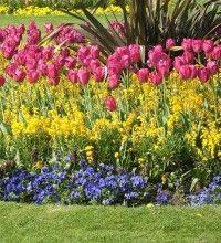 Img jardin tulipanes art