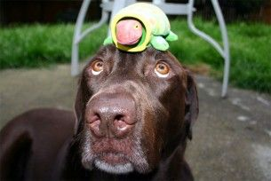 Img juegos caseros para mente perro inteligencia art