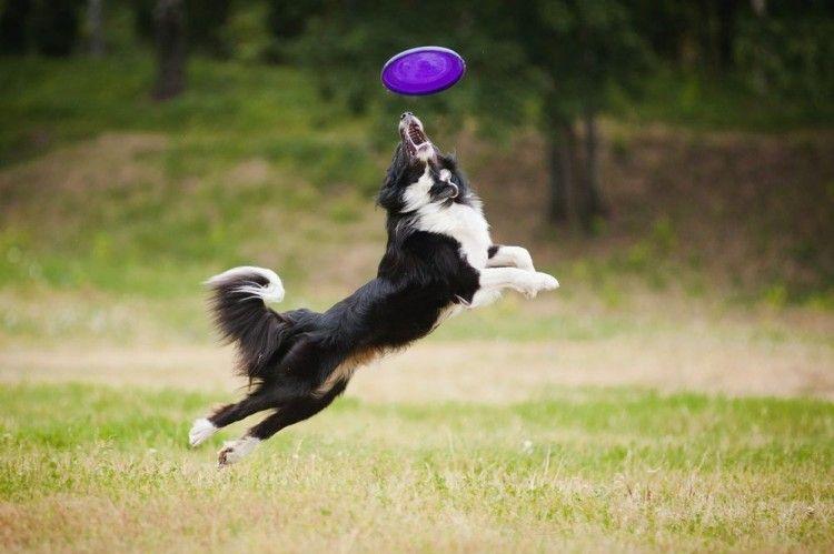 Img juegos perros aire libre art